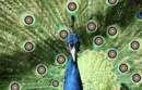 Une idée de mascotte... Par nos plus jeunes archers...